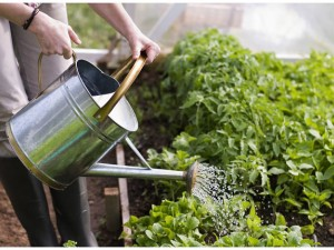 Practical Planting Tips