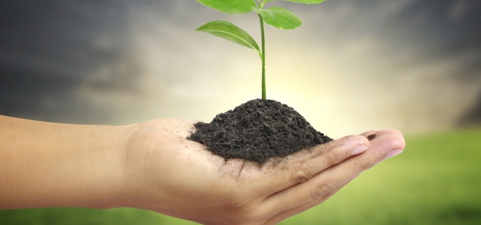 Plant soil