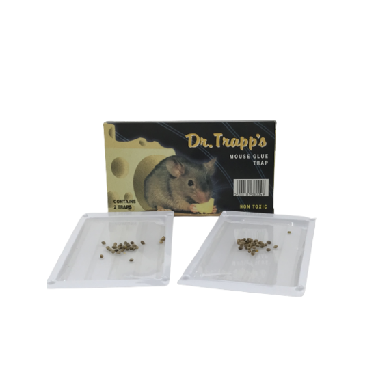 DR. TRAPPS  (2 TEM)